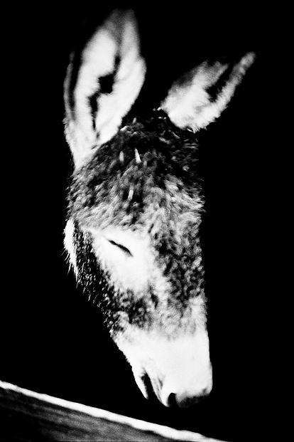 Spricigo_JF_001 © JF Spricigo – galerie Camera Obscura Paris.tif