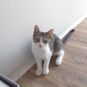 Kitty-10.jpg