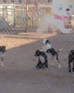 Marlette's pups-1_edited.jpg