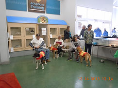 Mohave County AZ dog adoptions