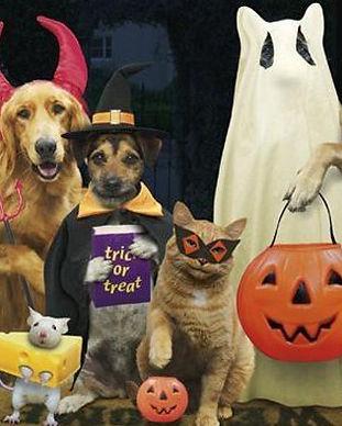 halloween-humor-3_edited.jpg