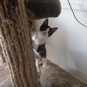 Kitty-11.jpg