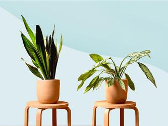 plants gshopee.jpeg