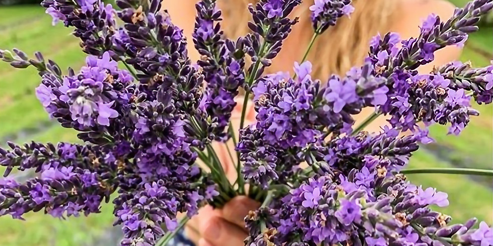 U-Pick Lavender