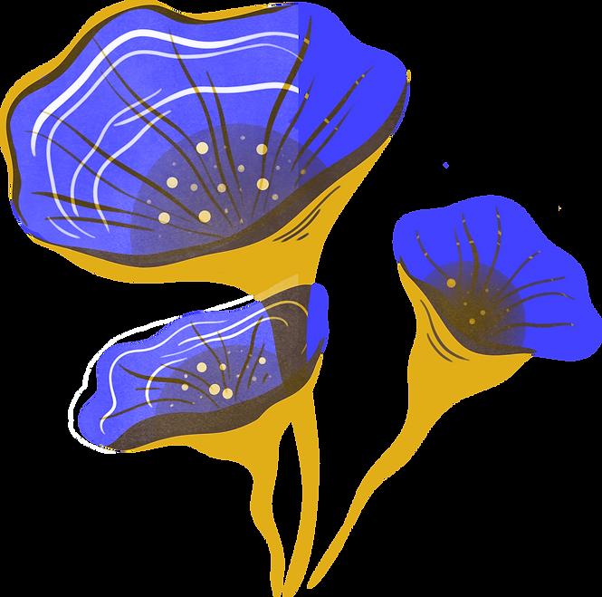 plante2.png