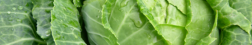 Cabbage_iStock-544313316222.png