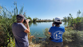 How to Avert the Destruction of the Sepulveda Basin Wildlife Area