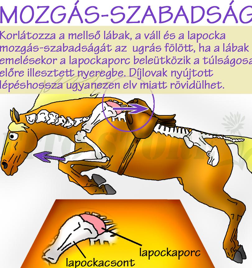 MOZGÁSSZABADSÁG NYEREG ALATT