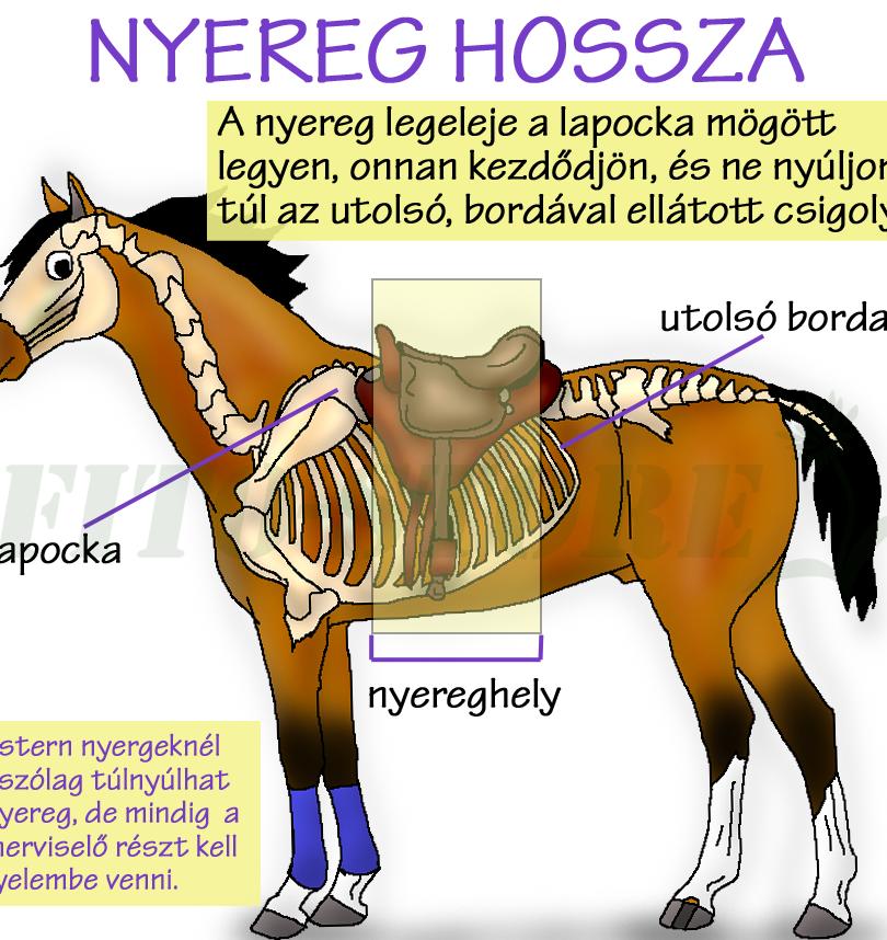 NYEREG HOSSZA