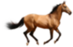 horse-2775949_1920.png