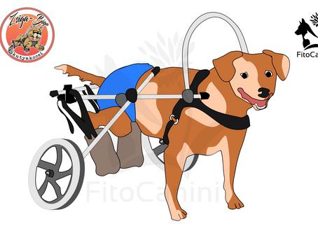 Mozgássérült kutyáknak gyógynövények