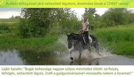 Lajkó Katalin, Bogár_edited-1.jpg
