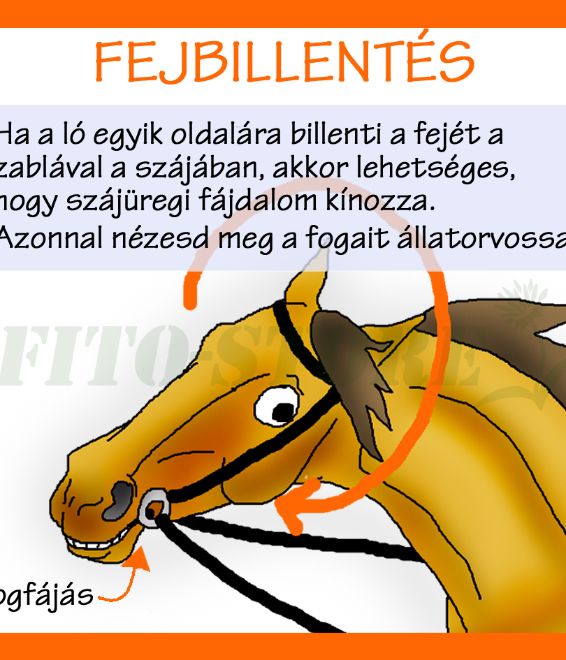 FEJBILLENTÉS