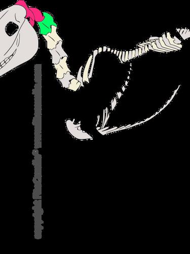 csontváz_atlas_axis-2.png