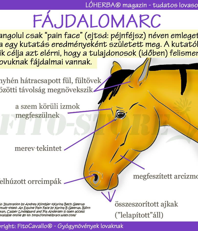 FÁJDALOMARC