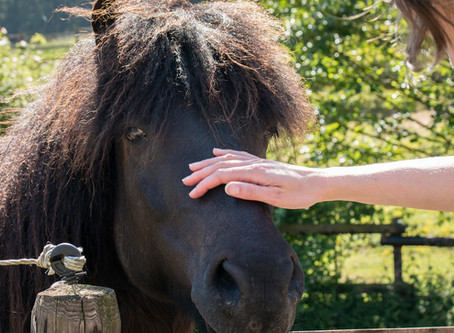 Sebek, horzsolások gyógynövényes kezelése lovaknál
