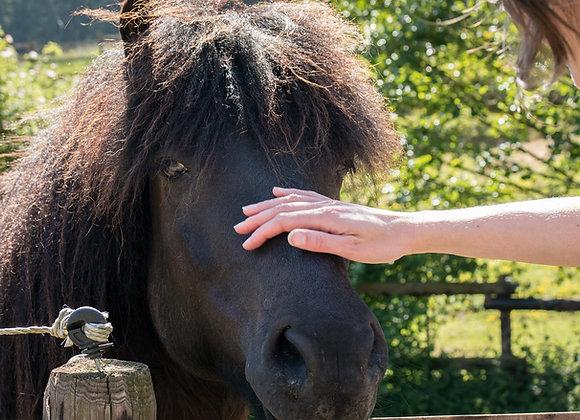 Májbetegségek kezelése és májregeneráció gyógynövényekkel lovaknak