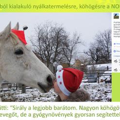Szabó Kitti, Sirály
