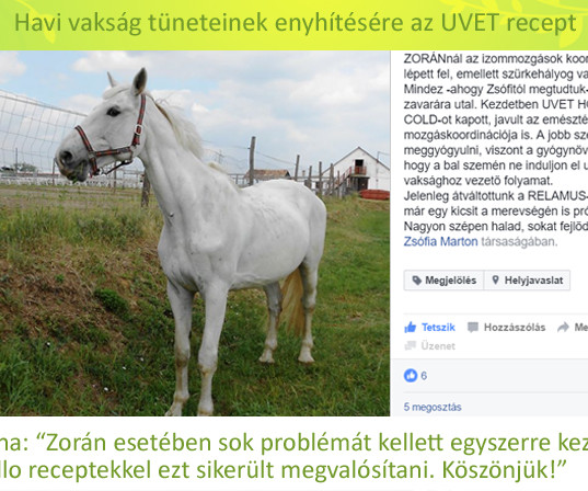 Zorán, Győrfy Anna