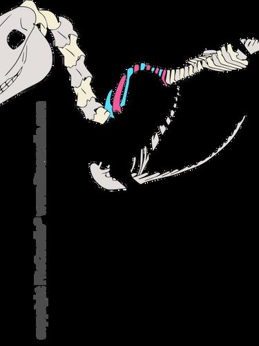 csontváz martájék -10.png