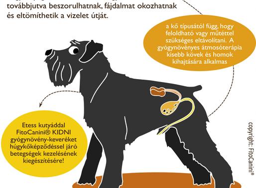 Húgykő ellen gyógynövények kutyáknak