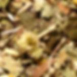 darstap2.jpg