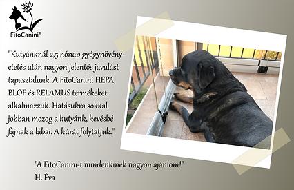 H.Éva_Fitocanini_ajánlás.png