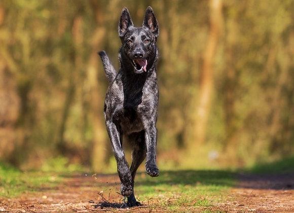 Hiperaktív, túlpörgésre (és agresszióra) hajlamos kutyának gyógynövények