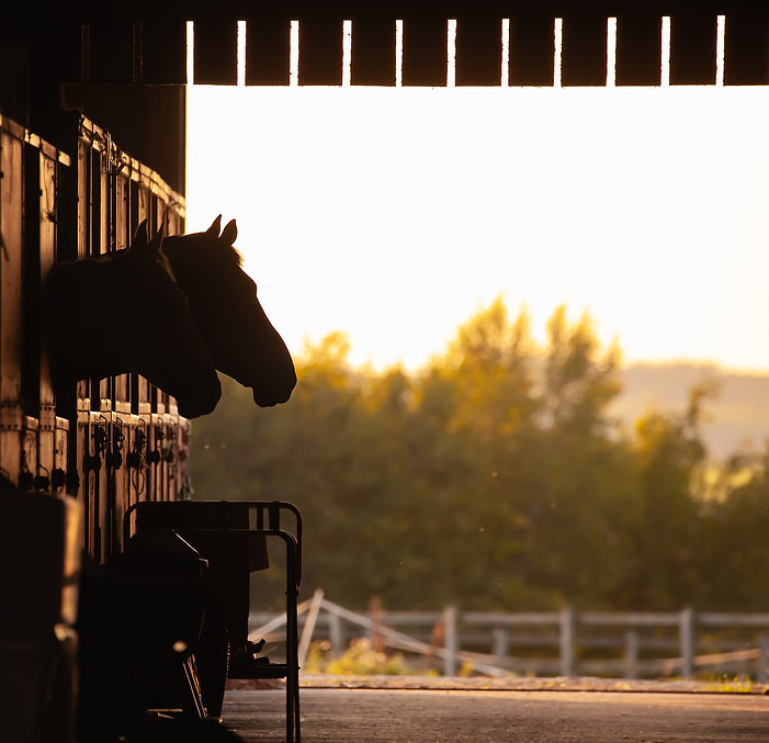 equestrian-4426777_1920.jpg