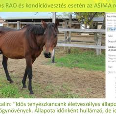 Gálné Bánfy Katalin, Juliska