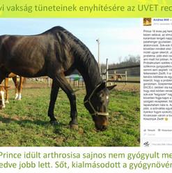 Prince, Witt Andrea