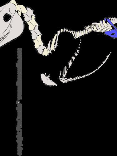 csontváz_medence_-11.png