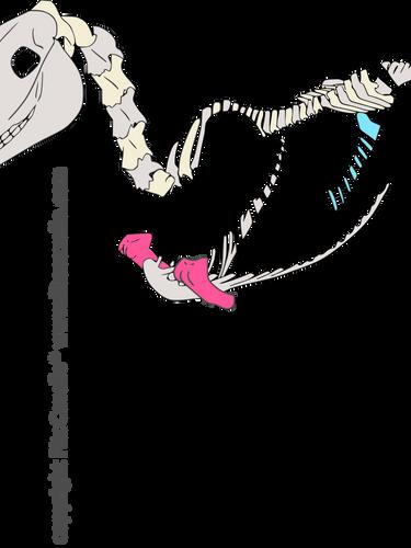 csontváz_felkar_comb-4.png