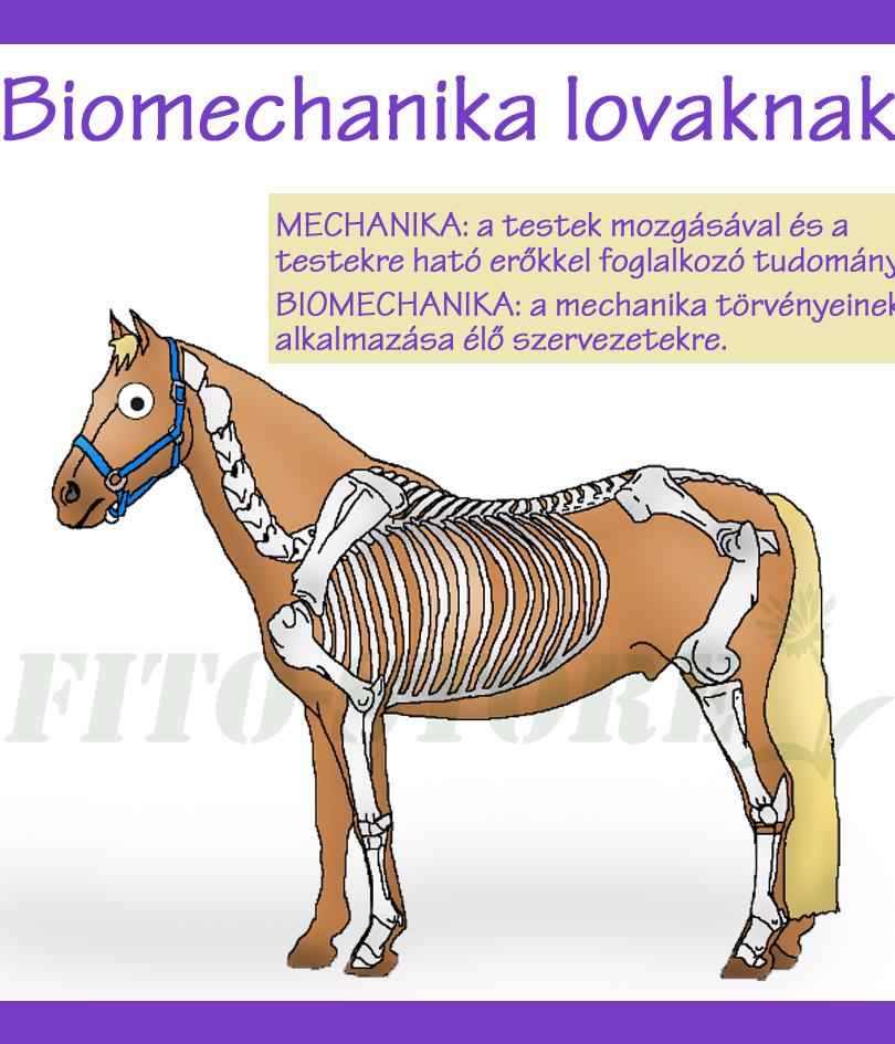 BIOMECHANIKA LOVAKNÁL