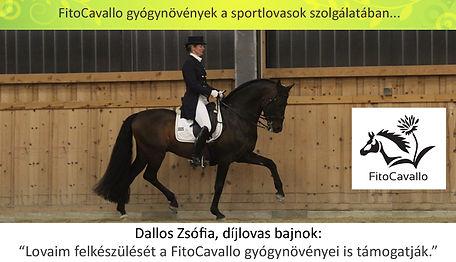 ajánlás Dallos Zsófia_edited-1.jpg