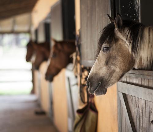 ló köhögés férgek nem gyógyszer paraziták az emberi fejen