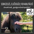 Sebek, elsősegély, rehabilitáció - gyógy