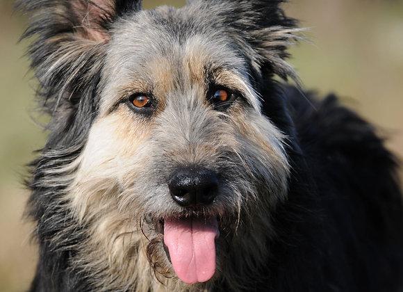 Idős kutya immunerősítése gyógynövényekkel