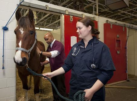Sebek, horzsolások gyógyulása lovaknál