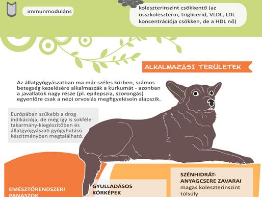 Kurkuma az állatorvosi fitoterápiában - infografika