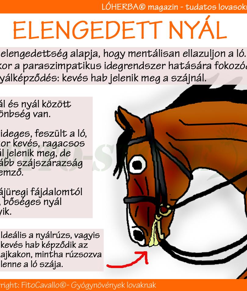 ELENGEDETT LÓ NYÁLA
