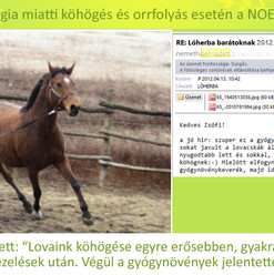 Németh Bernadett, shagia lovak_edited-2.