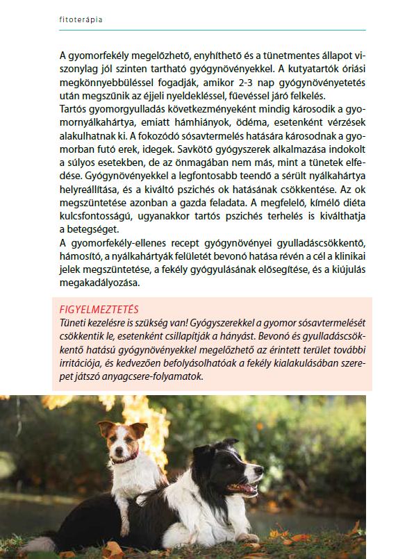 A kutya gyomorfekélye esetén etethető gyógynövények