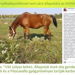 Dénes Kata, Viki_edited-1.jpg