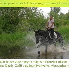 Lajkó Katalin, Bogár