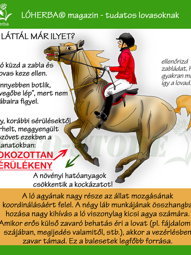 ÍNSÉRÜLÉS 1