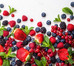 Energy & Mood - Probiotics and polyphenols improve physical and mental health