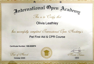 Pet First Aid and CPR Certificate