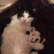 Missy & kittens