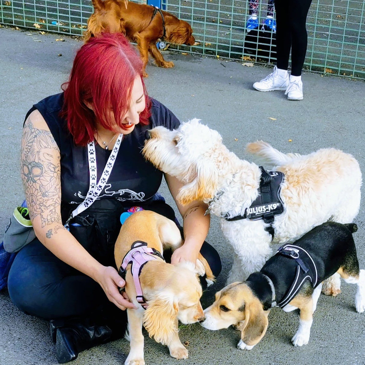 Puppy Socialisation Sessions